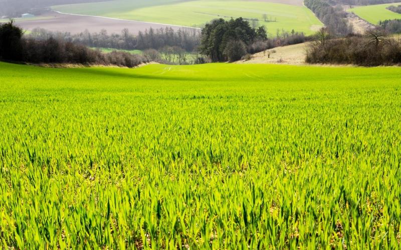 ...und die Natur konnte den Regen doch gebrauchen: Frisches Grün!