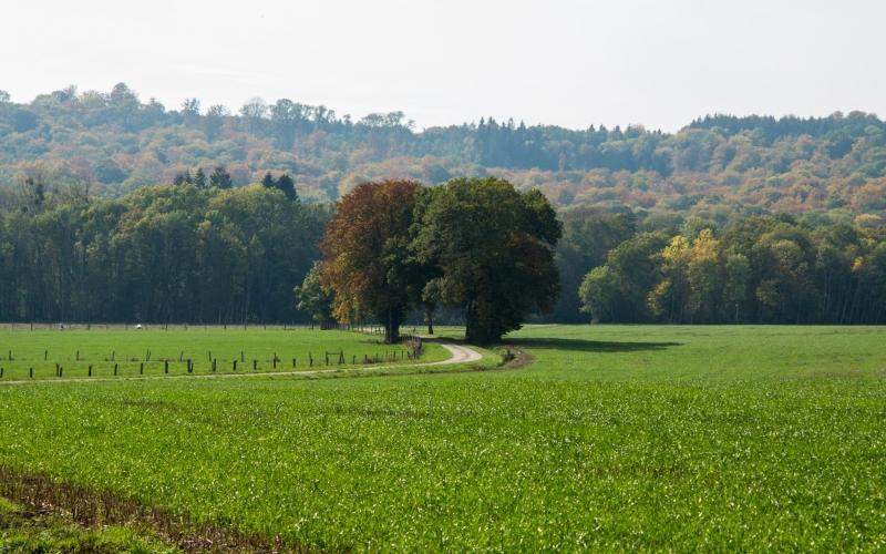 Nach dem Schatten dieser Bäume werden sich Pilger im Sommer sehnen!