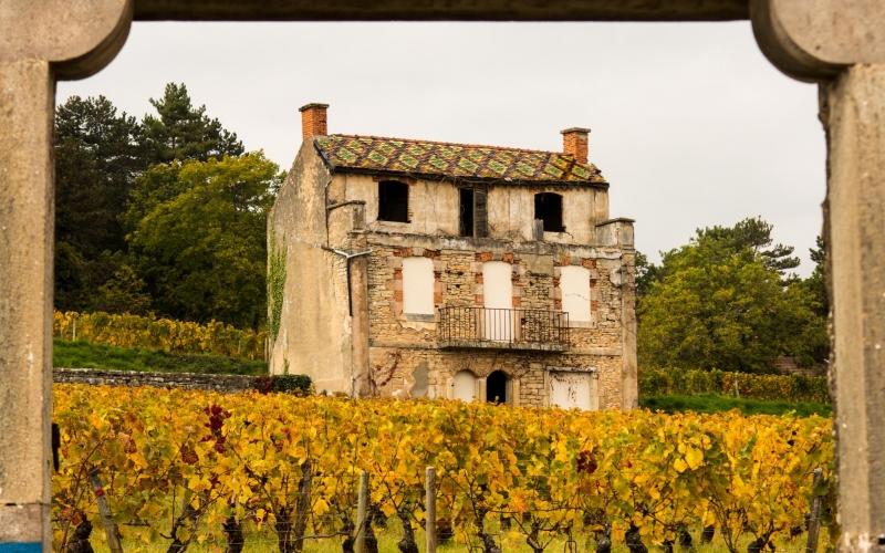 In der Nähe von Gevrey: Im Grunde ist hier jeder Weinstock kartografiert und unverzichtbar für den Wein der Lage!