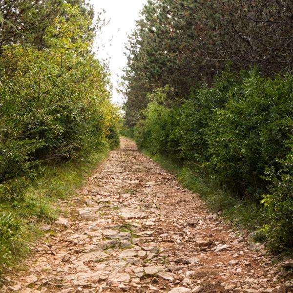 Buchsbaumwald: Kurzweilig zu laufen, aber eben nicht schnell...