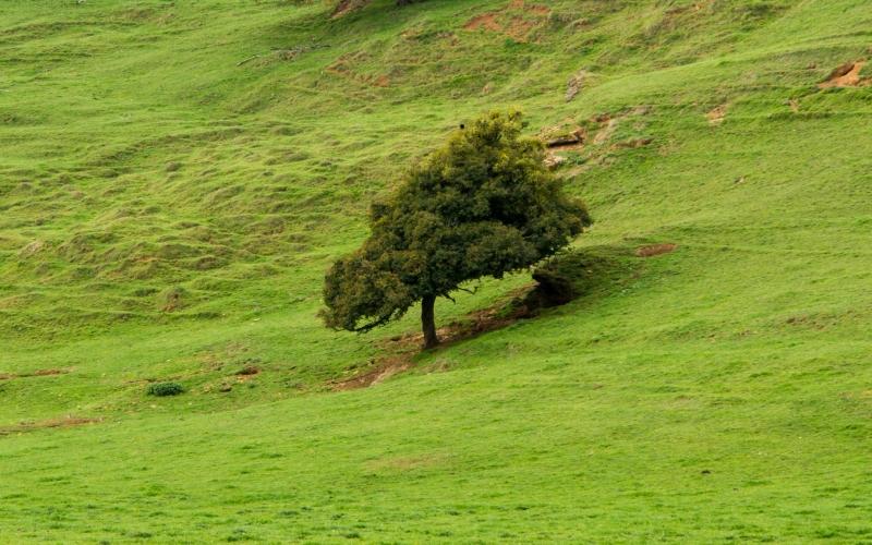 Schon erstaunlich, welche Form die Tiere der Landschaft und Natur geben, wenn man sie läßt!