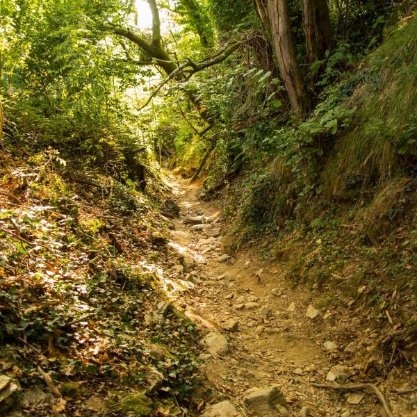 Der Weg stürzt sich regelrecht ins Tal!