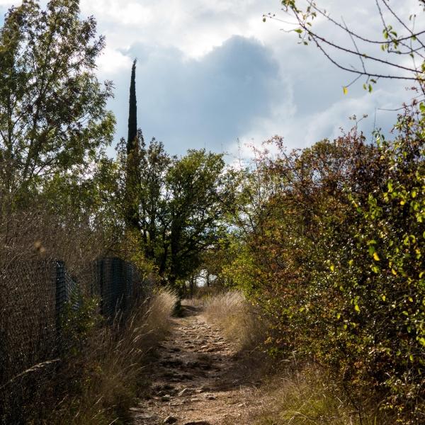 Eine der ersten Zypressen am Wegesrand.