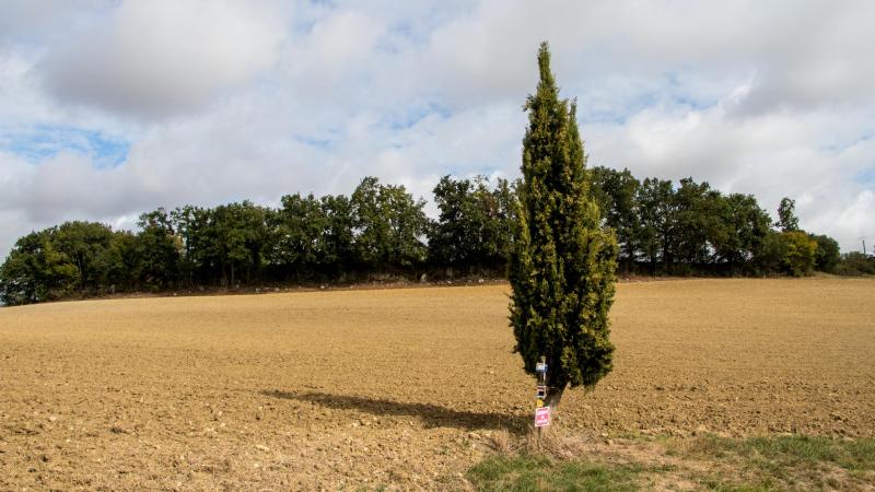Die erste bewußt gesehene Wegmarkierungs-Zypresse