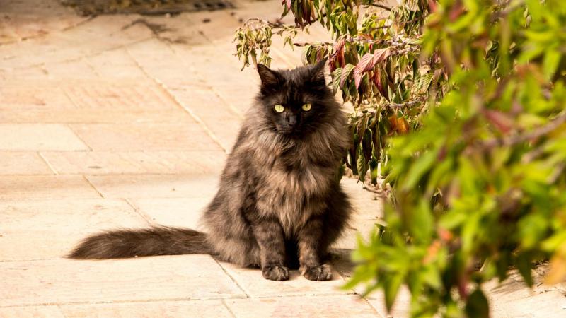 La Romieu: Lebende Katzen sind ganz klar in der Minderheit!