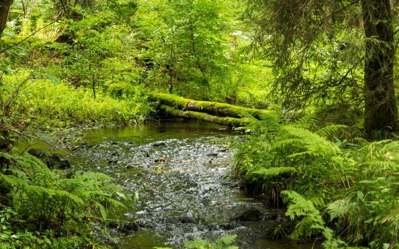 Der Schwarzbach, hier eher inkognito in grün unterwegs.