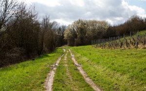 Jakobsweg Ancy Weg am Weinberg