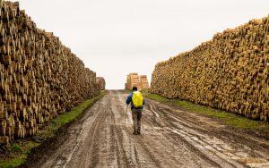 Jakobsweg Coussey Weg durchs Holzlager