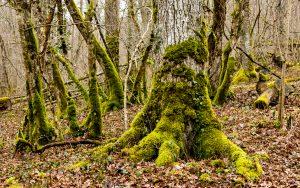 Jakobsweg modriger Wald bei Goussaincourt