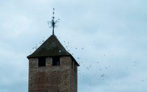 Jakobsweg Cluny Vögel am Turm