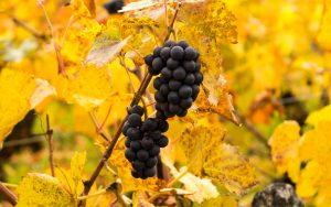 Jakobsweg Mercurey Pinot Noir