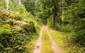 Jakobsweg Nähe Col de Patoux im Wald