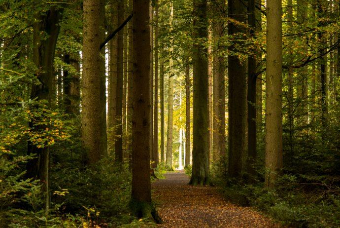 Jakobsweg Hunsrück: herbstlicher Kulturwald bei Rheinböllen