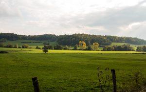 Jakobsweg Auen in der Nähe von Plesnoy