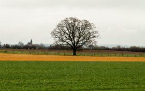 Jakobsweg Darney aux Chenes Baum