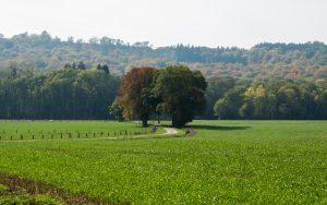 Jakobsweg Feld bei Aureil Maison detail