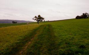 Jakobsweg Fisch Landschaft