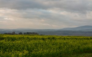 Jakobsweg Hunsrück: trübes Panorama