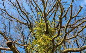 Jakobsweg Jezainville Baum vor Himmel