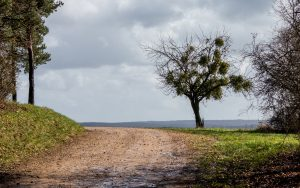 Jakobsweg Jezainville Baum vor Horizont