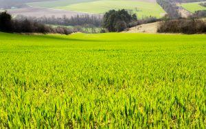 Jakobsweg Jezainville Feld in der Frühlingssonne
