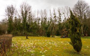 Jakobsweg Norroy Priesterwald sag mir wo die Blumen sind