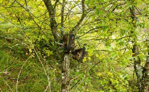 Jakobsweg Pierrefontaines Schuhe am Baum