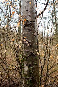 Jakobsweg Priesterwald Baum