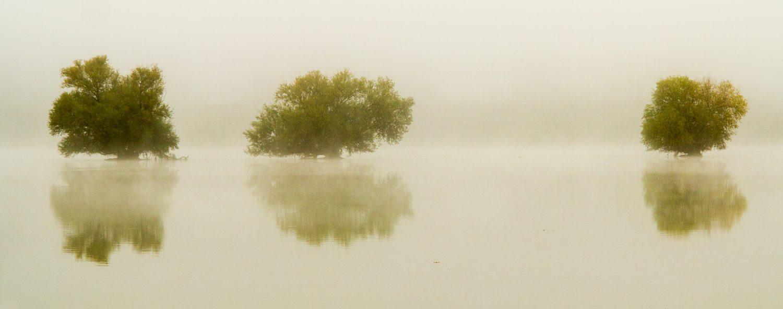 Jakobsweg: Rhein bei Ingelheim Herbststimmung Panorama