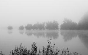 Jakobsweg: Rhein bei Ingelheim Herbststimmung schwarz/weiss