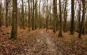 Jakobsweg Sanry-les-Vigy matschiger Wald