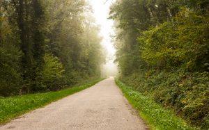 Jakobsweg Strasse im Wald bei Coiffy les Haut