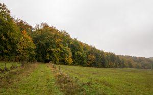 Jakobsweg Waldrand bei Grancey le Chateau