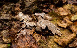 Jakobsweg Culles les Roches Herbstlaub mit Nieseltropfen