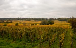 Jakobsweg Dijon Blick in die ersten Weinberge