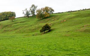 Jakobsweg Taize Baum in der Weide