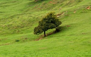 Jakobsweg Taize Baum in der Weide Detail