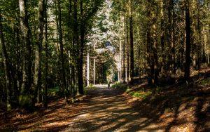 Jakobsweg Les Echarmeaux Waldweg