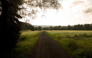 Bonifatius-Route Blankenau Weg in die Felder am Morgen