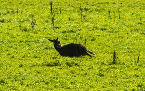 Bonifatius-Route Gedern entspannter Esel