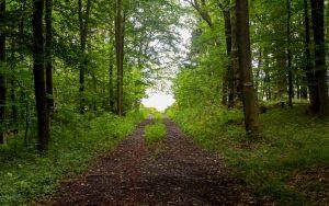 Bonifatius-Route Glauburg Waldweg