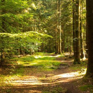 Bonifatius-Route Kleinlüder Wald am Morgen