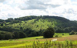 Bonifatius-Route Vogelsberg Landwirtschaftsfläche