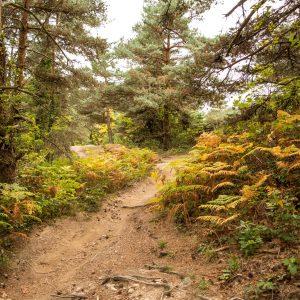 Jakobsweg Abstieg nach Monistrol d'Allier