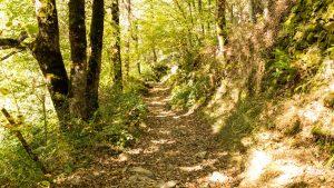 Jakobsweg Aubrac Belvezet Abstieg im Wald