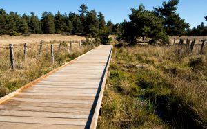 Jakobsweg Aubrac Steg im Sumpf