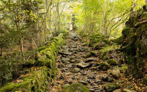 Marols Weg im Wald