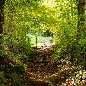 Jakobsweg Saint Côme d'Olt Aufstieg im Wald