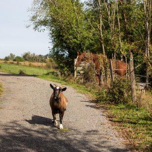 Jakobsweg wilde Tiere bei Saint Georges Haute Ville