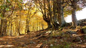 Jakobsweg Aubrac Bäume Nähe Gipfel